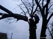 Обрезка деревьев (формовочная,  санитарная,  утилитарная и др.)