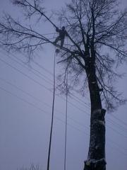 спилить дерево возле дома на кладбище около ЛЭП
